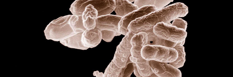 Des bactéries pour révolutionner le stockage de l'énergie