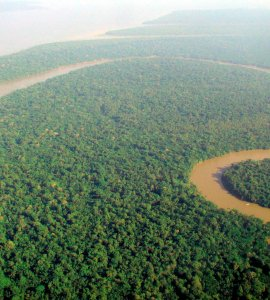Aerial_view_of_the_Amazon_Rainforest Wikimedia