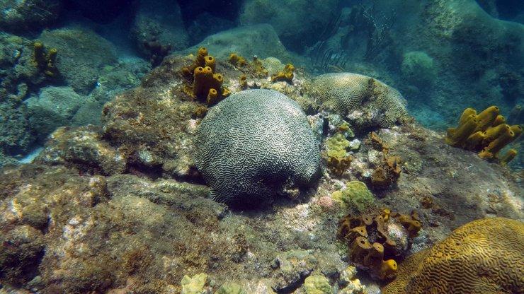 Creuser des mines au fond des océans, nouvelle frontière industrielle