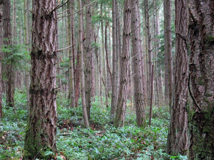 Foret Wikimedia Commons