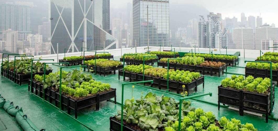 Ferme urbaine natural capital coalition