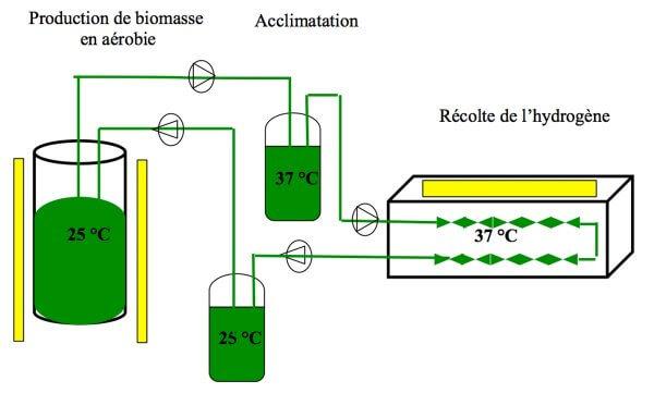 Production renouvelable d'hydrogène par lesmicro algues: révolution ouutopie?